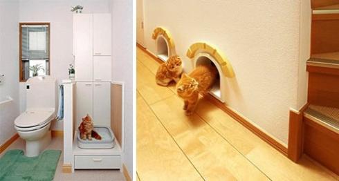 cat-home2